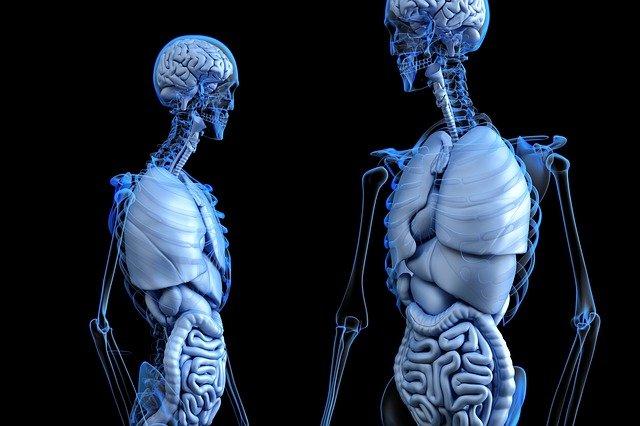 lidská anatomie